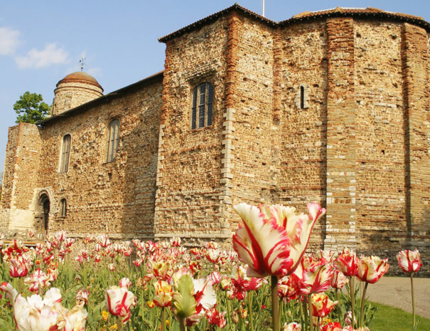 Colchester Castle Museum | Piglets Boutique B&B