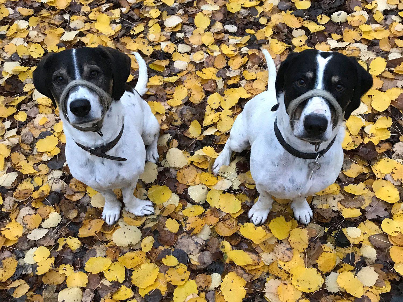 Hamish & Harry enjoy an autumnal walk